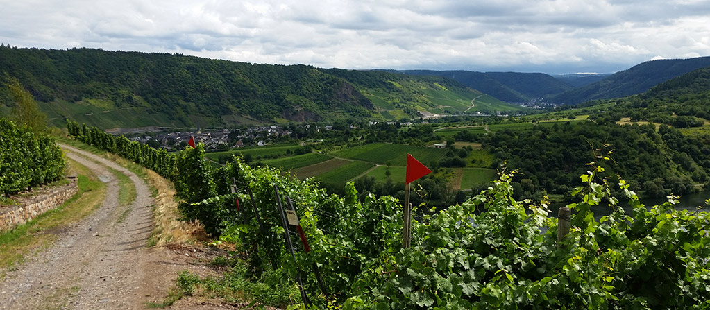 Weinrecht - Blick in die Weinberge